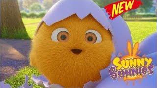 Sunny Bunnies Cartoons | BUNNY CHICKS | SUNNY BUNNIES | Funny Cartoons For Children