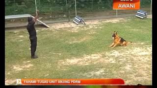 Fahami Tugas Unit Anjing Pdrm