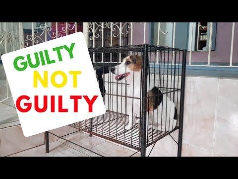 Dog Put to Jail! Accused of Pushing --