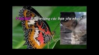 Hoa Bướm Ngày Xưa - Nguyễn Hiền