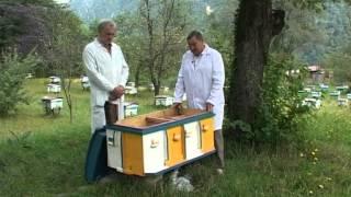 Краснополянская опытная станция пчеловодства kosp-plem.ru