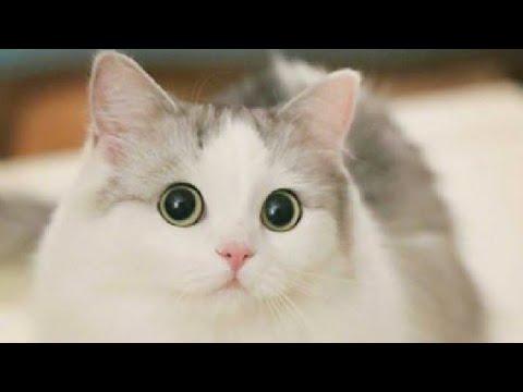 Kumpulan Foto Kucing Lucu Dan Imut Youtube