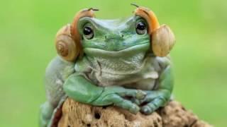 Фотографии лягушек, какими вы их ещё не видели