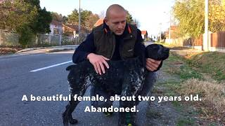 Rescuing a homeless dog - so close to death!