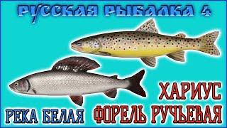 РР4 РЕКА БЕЛАЯ ФОРЕЛЬ РУЧЬЕВАЯ РУССКАЯ РЫБАЛКА 4 БЕЛАЯ ХАРИУС RUSSIAN FISHING 4 BELAYA RIVER