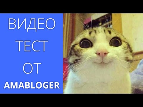 Epic Cat Fight / HILARIOUS CATS / Смешные коты и кошки