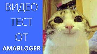 Тестовое видео про котиков от AMABLOGER.RU