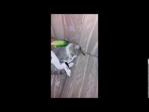 cat shaking tail but not spraying
