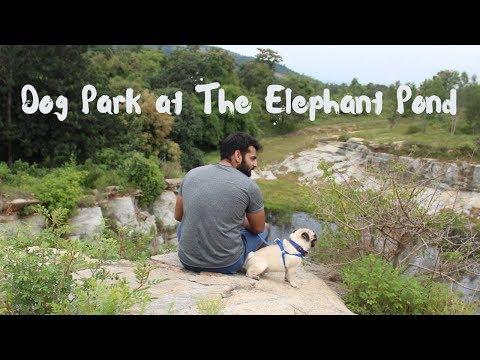 Dog Park at The Elephant Pond | Bangalore 2018 | vLog | RambaHo