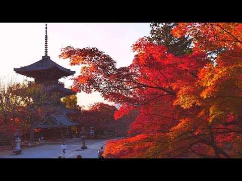 JG 4K HDR 京都 真如堂 夕刻の紅葉(重文) Kyoto,Shinnyodo Evening in Autumn (Cultural Property)