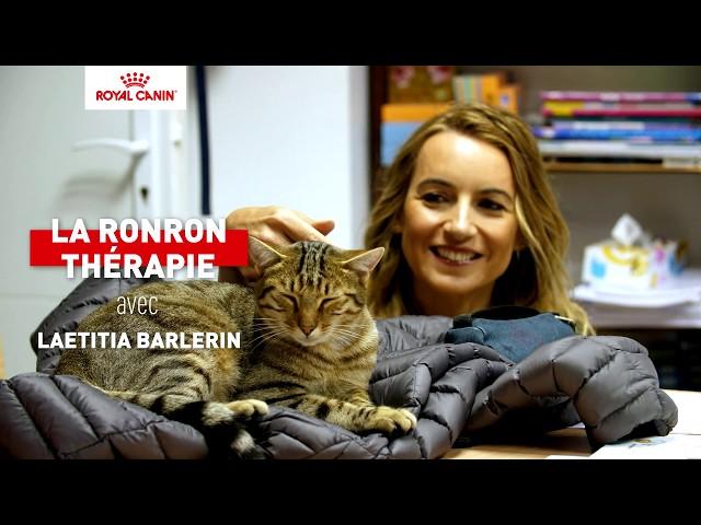 Les chats en école, connaissez-vous la ronronthérapie ?