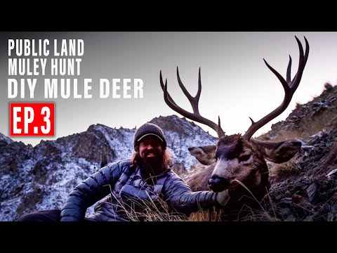 MOUNTAIN MULEY DOWN | PUBLIC LAND MULE DEER HUNT