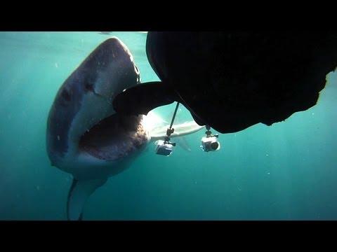 Colossus Attacks Robo-Seal | Air Jaws Apocalypse -- Shark Week 2012