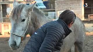 Le cheval Camargue valorisé en centres équestres