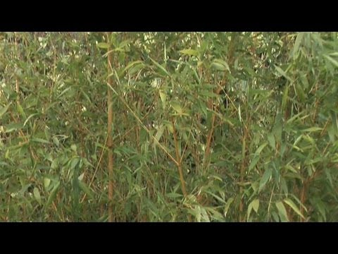 how to take care of bamboo tree