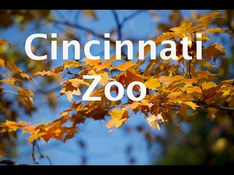 Cincinnati Zoo 2016
