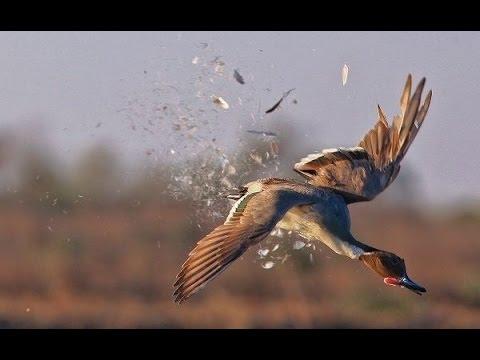 Работа подсадной утки.