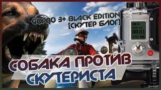 Собака против скутериста / gopro 3+ black edition [СКУТЕР БЛОГ]
