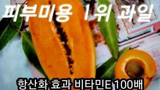 피부미용 1위 과일 이것이다.....항산화효과 비타민E…
