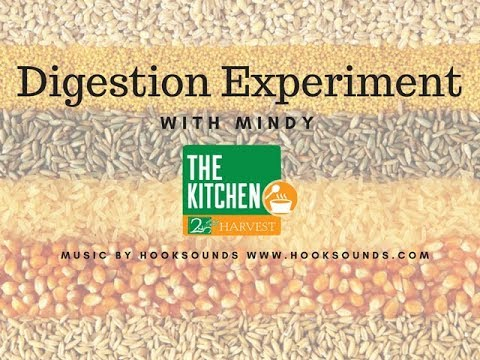 Whole Wheat Digestion Experiment
