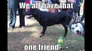 Dogs Are A Crack Up!!! (pt 1) ... Enjoy!