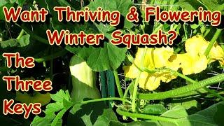 3 Tips for Successful Winter Squash Heavy Production: Pumpkins, Butternut, Acorn, Spaghetti - Water!