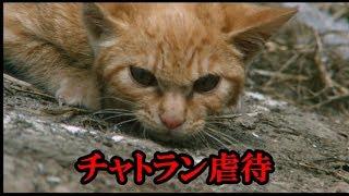 【子猫物語】チャトラン虐待の疑惑