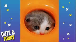 Cute and Funny Animals videos Compilation #25 Cute Animals