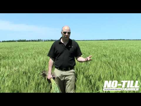 No Till Wheat Yield Champion's Tips on Fertility, Grid Sampling
