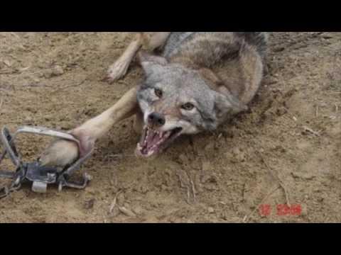 Hayvanlara Eziyete Hayır