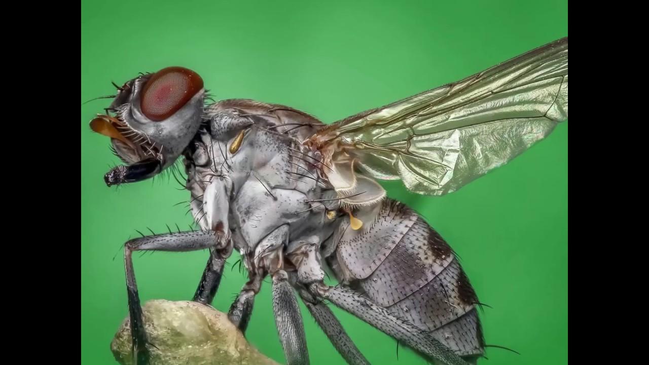 Comment Se Débarrasser De Moucherons Naturellement 3 façons de se débarrasser des mouches - ooreka.fr