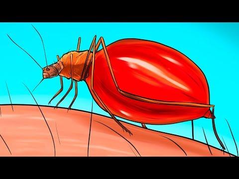 Что происходит с вашим телом, когда вас кусает комар
