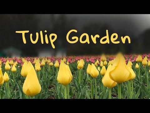 Switzerland सा नजारा देखिए Kashmir के इस Tulip Garden में