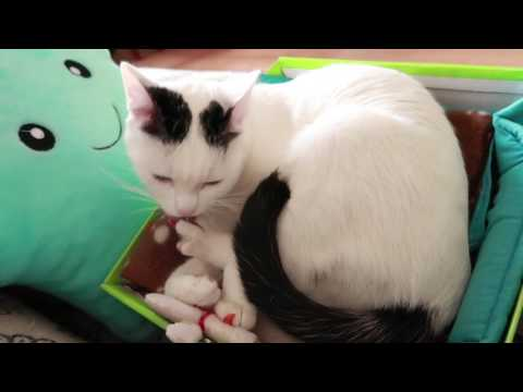 Cats Purring, Cats Grooming Each Other and Themselves. Compilation