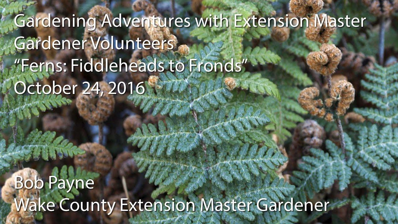 Gardening Adventures With Extension Master Gardener Volunteers Ferns Fiddleheads To Fronds
