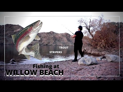 Fishing For Trout And Stripers At Willow Beach AZ | We Got Skunked!