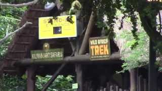 Location of Penny Machines outside Kilimanjaro Safaris - Animal Kingdom - Walt Disney World