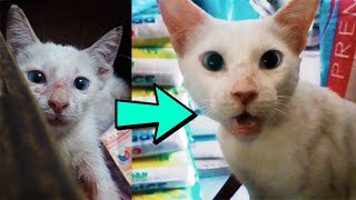 This is why y๐u should spayed/neuter your cat