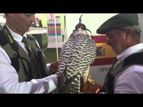 Australia represented at the 2014 International Falconry Festival