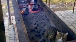 Cat in grill
