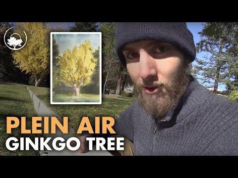 Ginkgo Biloba - Silybum marianum - Le Jardin du Pic Vert - Acheter pas cher