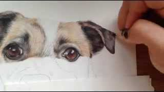 Speed Drawing of Katy - Jack Russell Cross