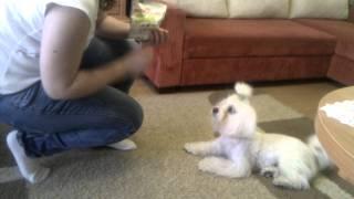 Chabi I Sztuczki - Nagradzany Royal Canin Educ !