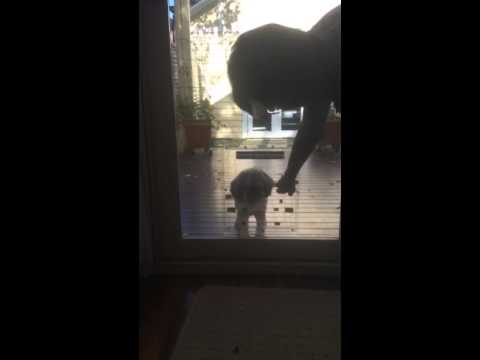 Teaching A Shy Dog To Walk Through Their New Dog Door Installed By