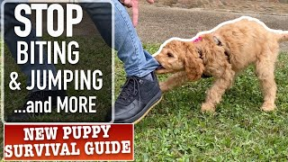 How to Stop 3 Annoying Puppy Habits! PLUS Crate Training, Nail Trimming and MORE (Ep12)