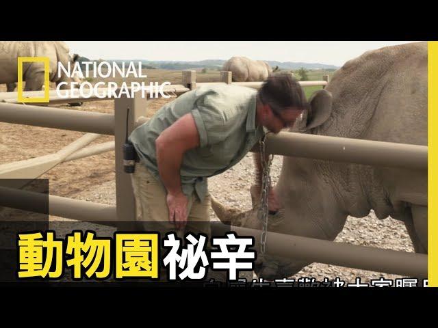 這回的任務是要幫犀牛阿南做超音波檢查,看看犀牛寶寶的健康狀況 【動物園祕辛】短片精華版
