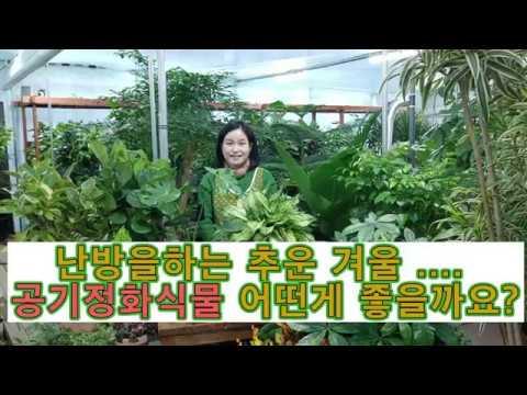 난방을 하는 겨울  실내공기정화식물 어떤게 좋은지  궁금하시죠?