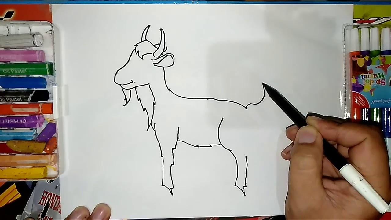 Cara Menggambar Kambing Dan Mewarnainya How To Draw Goat And Coloring It Youtube