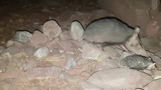 Amazing and Different Rare Animals in the world II Amazing Videos of Animals