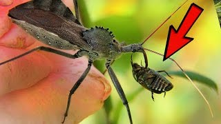 Scariest Insects List
